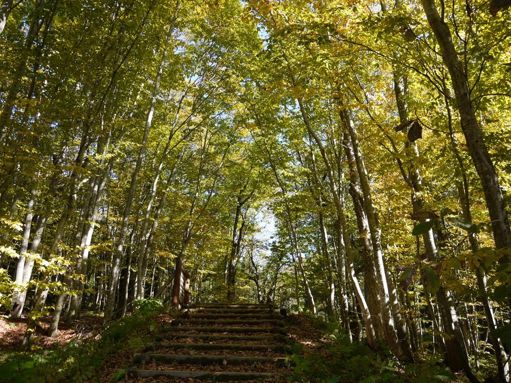 岳岱自然観察教育林