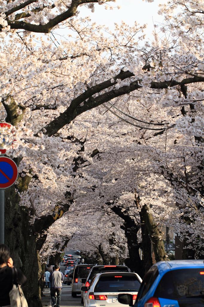 桜トンネル渋滞中