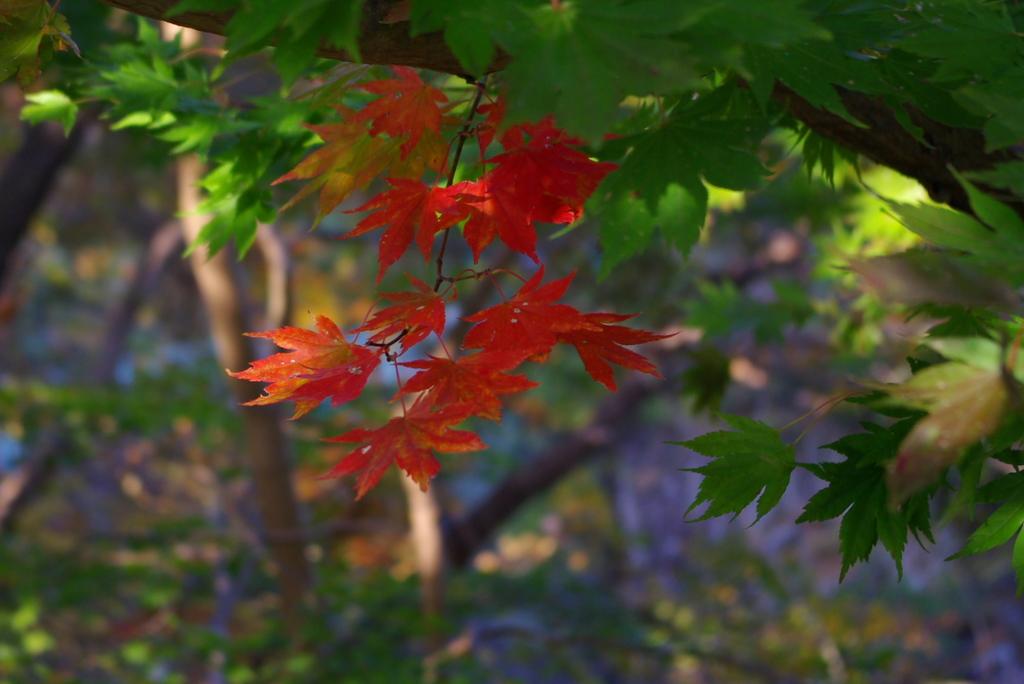 厳美渓09秋紅緑