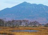 晩秋の尾瀬ヶ原ー白樺林と燧ヶ岳