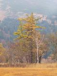 晩秋の尾瀬ヶ原ー至仏山を背景に2