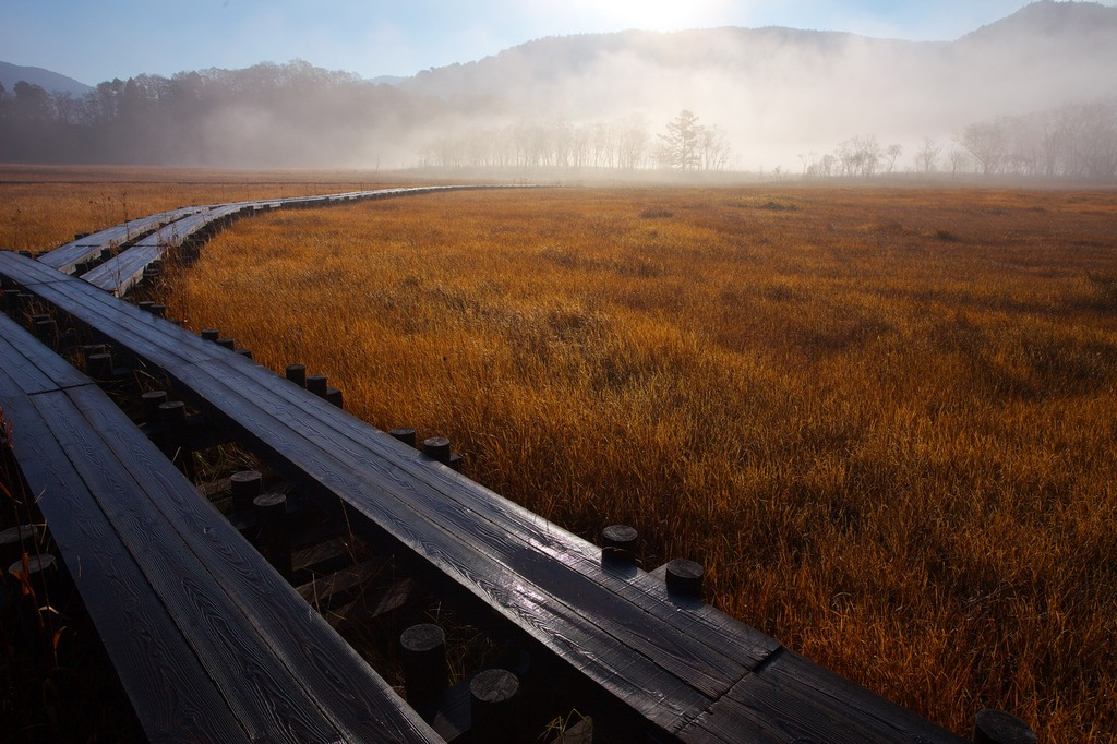 朝霧の尾瀬ヶ原(霜がとけて濡れた木道)
