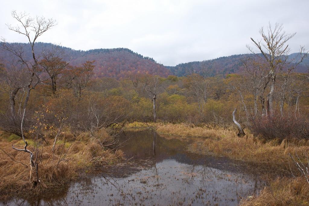 晩秋の尾瀬ヶ原(自然が作り出した庭)