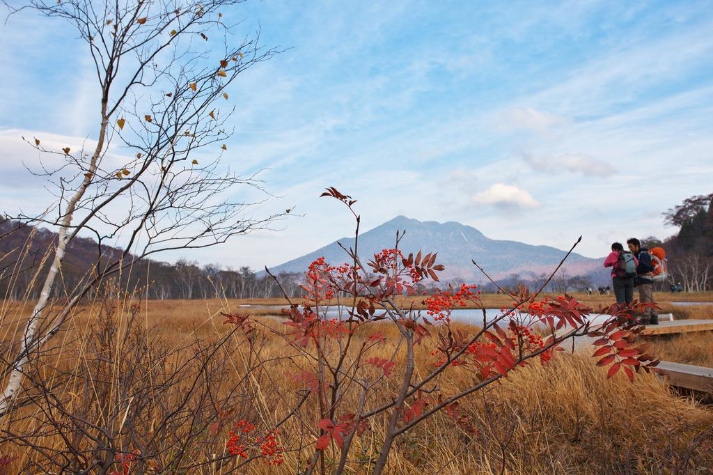 晩秋の尾瀬ヶ原(まだ残っていたナナカマド)