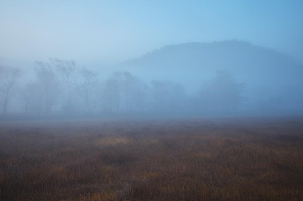朝霧の尾瀬ヶ原(見え始めた林)