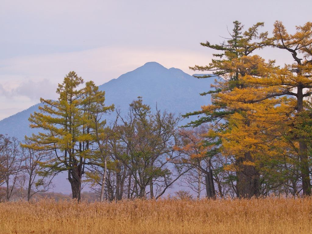 晩秋の尾瀬ヶ原ー燧ヶ岳を背景に
