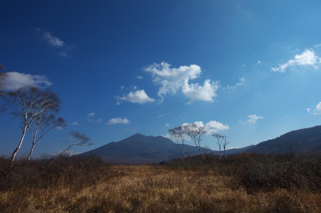 晩秋の尾瀬ヶ原(白樺と燧ヶ岳)