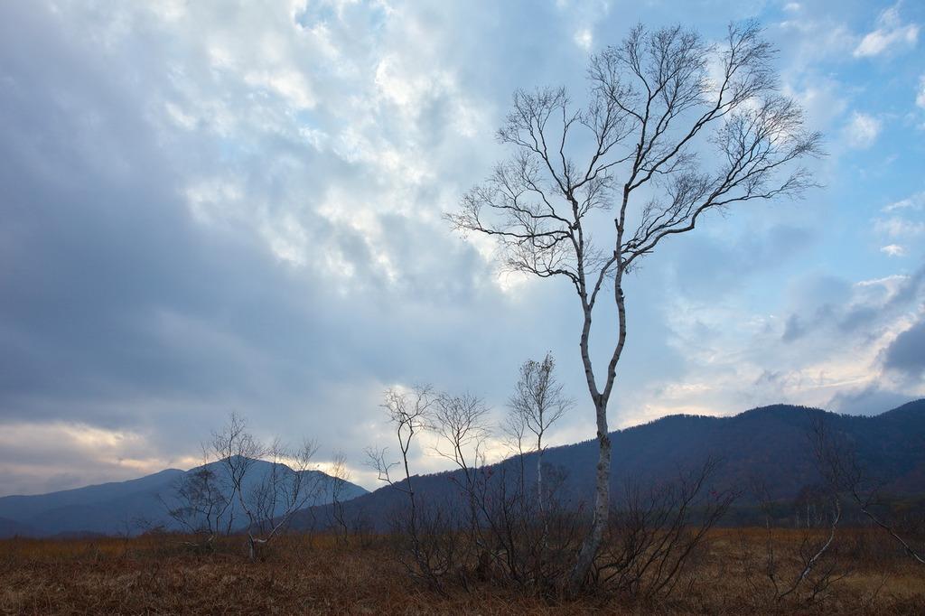 朝霧の尾瀬ヶ原(夕暮れ間近2)