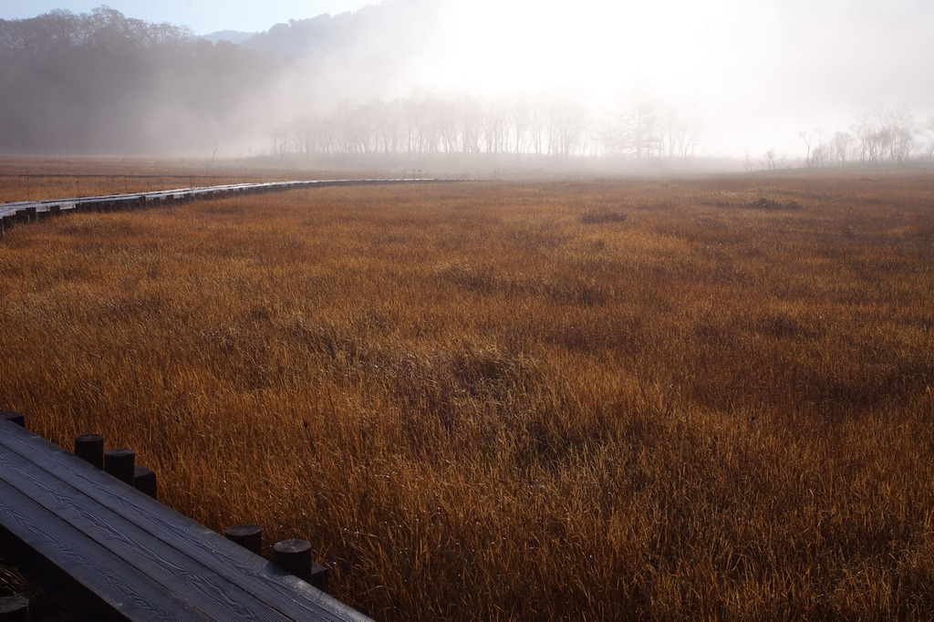朝霧の尾瀬ヶ原(朝日に照らされて)
