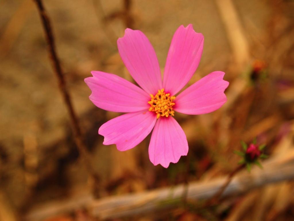河原に咲く花
