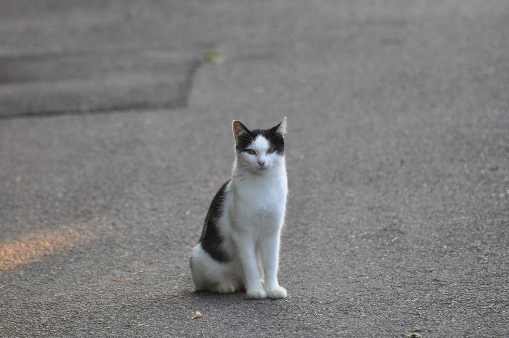 野良猫002