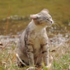 野良猫012