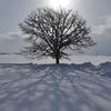 抱擁する木
