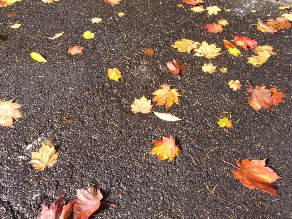 紅葉じゅうたん