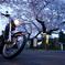 桜と小雨と改造バイク