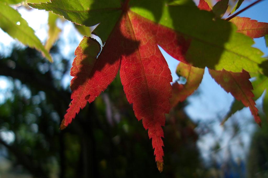 我が家の秋(2)
