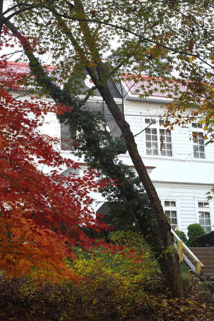 紅葉(3)