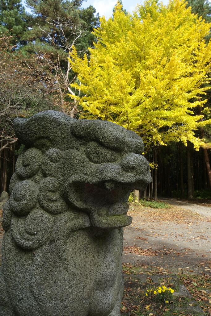 狛犬と銀杏