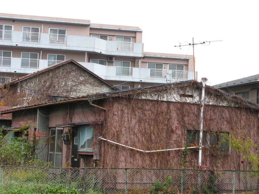 蔦に覆われる家