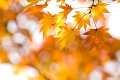 陽が射すわずかな秋の間に