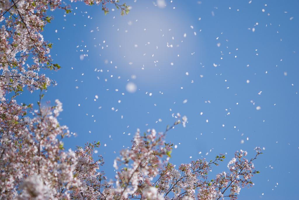 吹雪の下で僕らは・・・