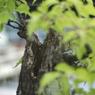 PENTAX PENTAX K10Dで撮影した植物(盆栽)の写真(画像)
