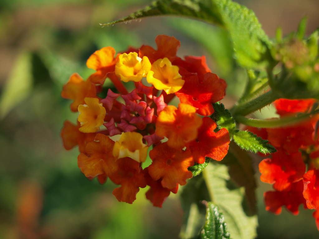 花の名前、不明