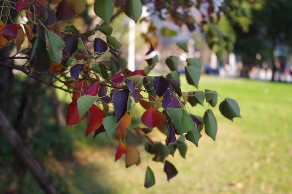 様々な色の葉