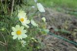 道端に咲く花