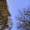 相対する木々