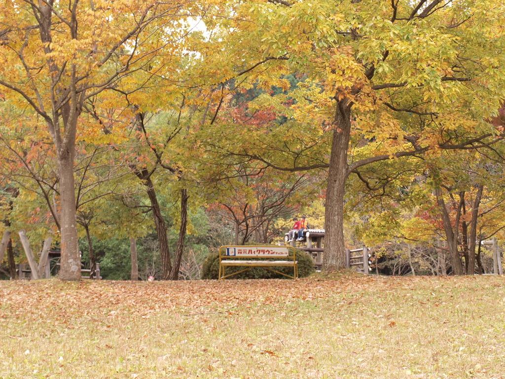 落ち葉降るベンチ
