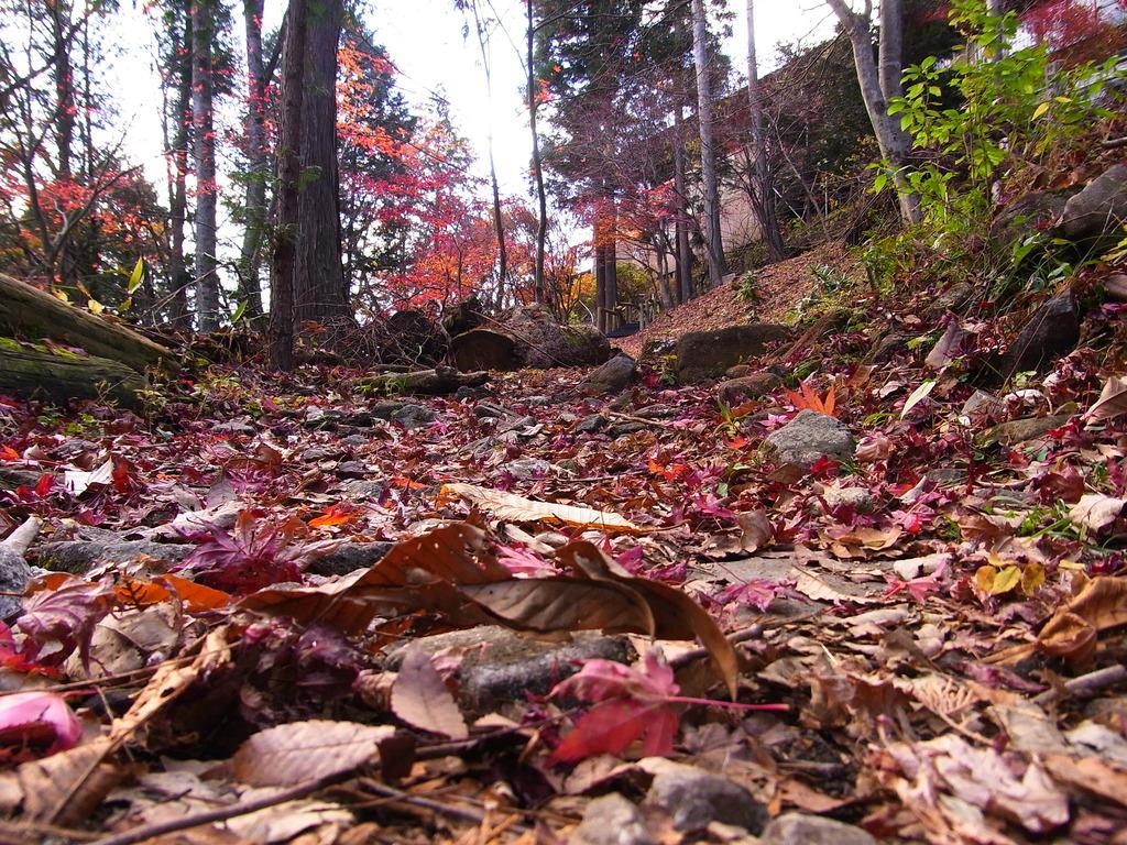 紅葉じゅうたんを歩いていくと・・・