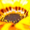 花の中心16