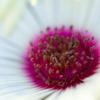 花の中心15