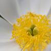 花の中心17