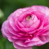花の中心10