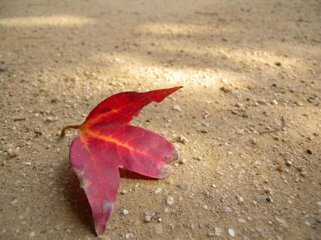 秋のお便り