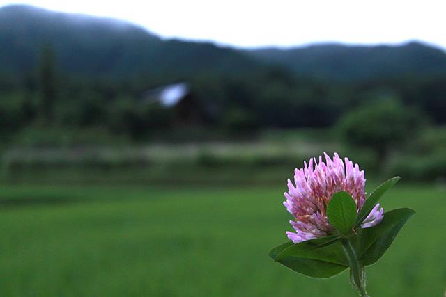 秋を想う薊