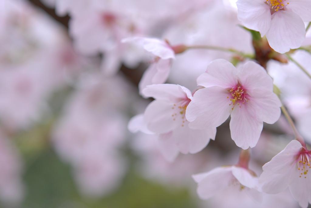 桜日和 Vol.4