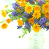 花のある暮らし(SOFT)