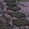 散りてなお桜。
