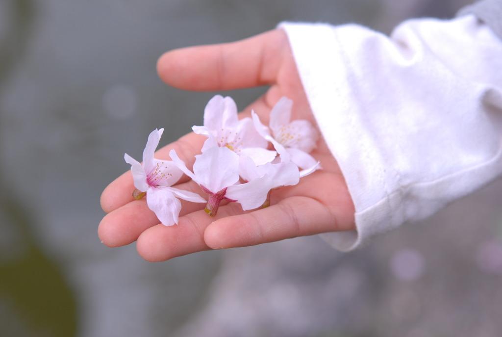 手のひらにも春いっぱい♪