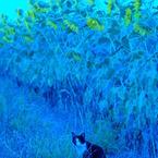 NIKON NIKON D60で撮影した動物(猫とひまわり)の写真(画像)