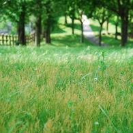 NIKON NIKON D60で撮影した風景(癒しの場所)の写真(画像)