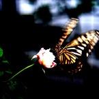 NIKON NIKON D60で撮影した動物(花から花へ)の写真(画像)