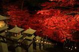晩秋の紅葉2