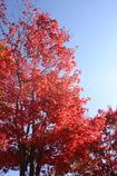 秋の陽射しを受けて