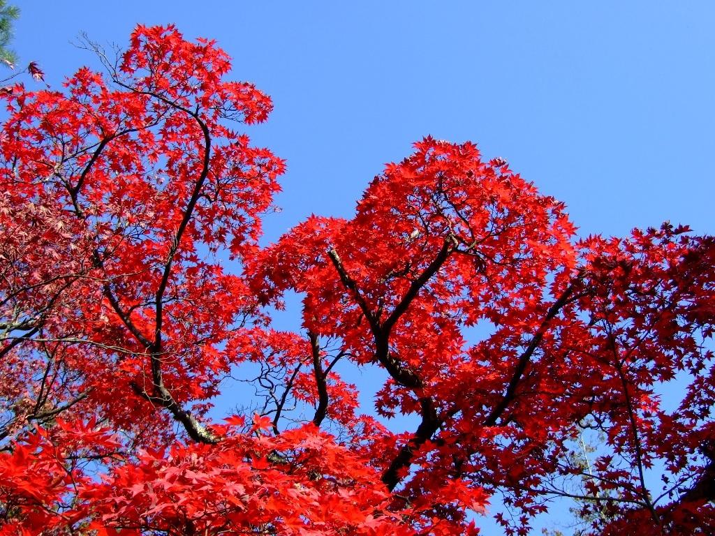 湯田中渋温泉郷「上林温泉」