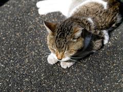 日溜まり猫