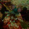 その他の海の生物